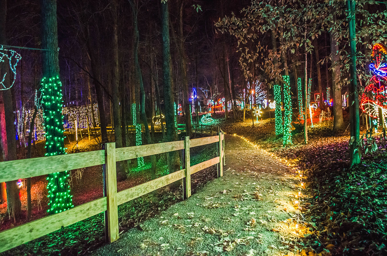Explore Park IllumiLights 2019 0046 - 4.5 200dpi